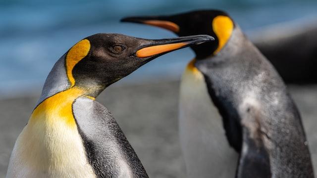 Cánh cụt